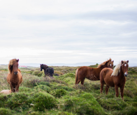 minifinder-gps-tracker-horse